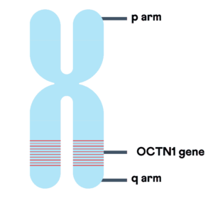 Chromosomal location of OCTN1 gene.
